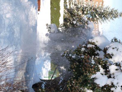 Nieve cayendo  de los arboles,parque Arriaga