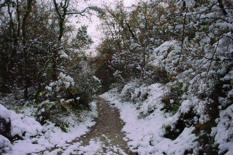 Camino angosto y frio
