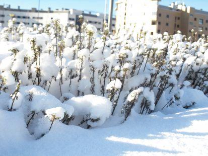 Duro invierno en Salburua