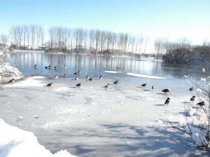 Duro invierno Salburua