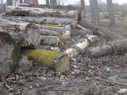Más árboles