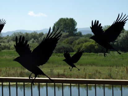 Aves en Salburua