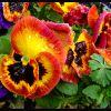 Flores con rocio
