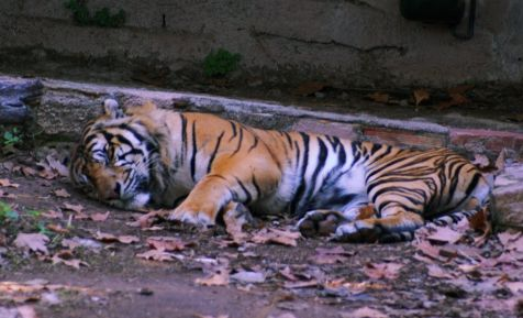 el gato haciendo la sieste