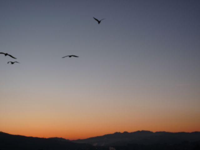 durangesado 22-02-2012