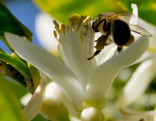 Calcetines de polen
