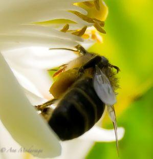 Portadora de miel