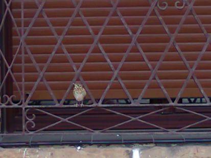 mirando por la ventana en Berango