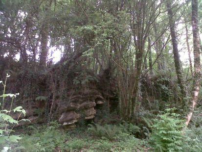 bosque de karrantza